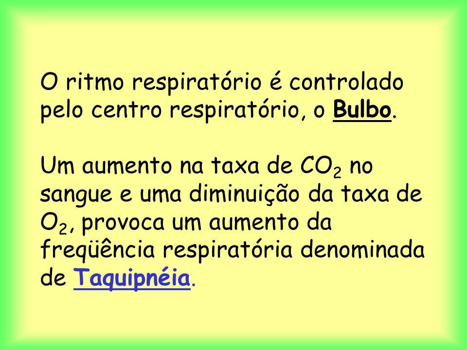 O ritmo respiratório é controlado pelo centro respiratório, o Bulbo. Um aumento na taxa de CO 2 no sangue e uma diminuição da taxa de O 2, provoca um
