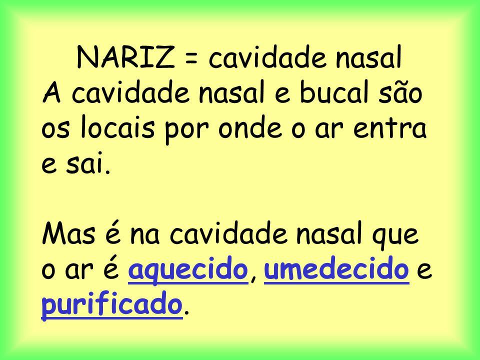 NARIZ = cavidade nasal A cavidade nasal e bucal são os locais por onde o ar entra e sai. Mas é na cavidade nasal que o ar é aquecido, umedecido e puri