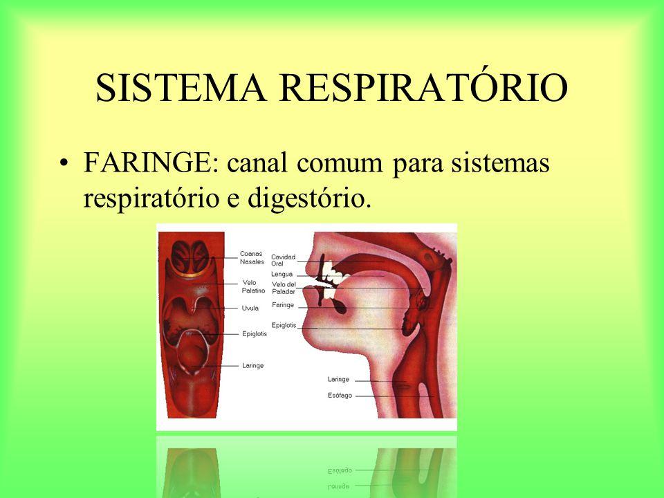 SISTEMA RESPIRATÓRIO FARINGE: canal comum para sistemas respiratório e digestório.
