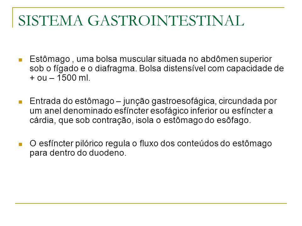 SISTEMA GASTROINTESTINAL Estômago, uma bolsa muscular situada no abdômen superior sob o fígado e o diafragma. Bolsa distensível com capacidade de + ou