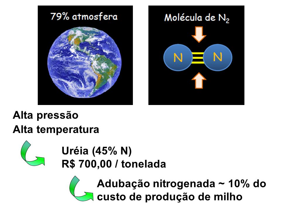 Alta pressão Alta temperatura Uréia (45% N) R$ 700,00 / tonelada Adubação nitrogenada ~ 10% do custo de produção de milho