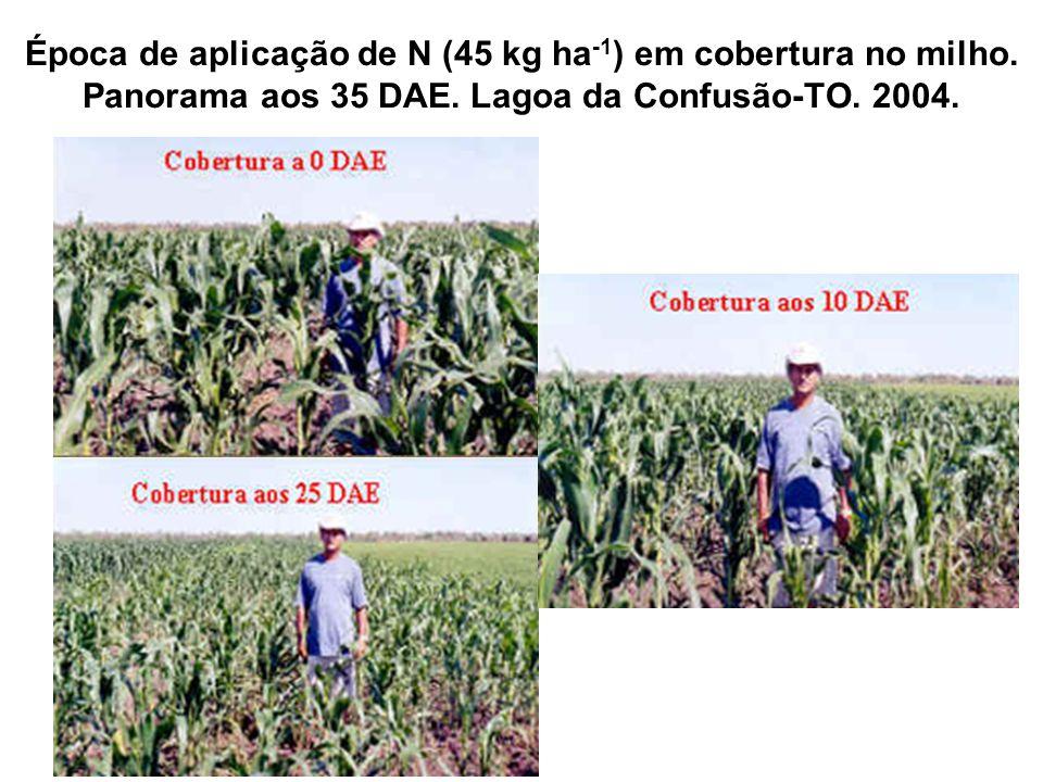 Época de aplicação de N (45 kg ha -1 ) em cobertura no milho. Panorama aos 35 DAE. Lagoa da Confusão-TO. 2004.