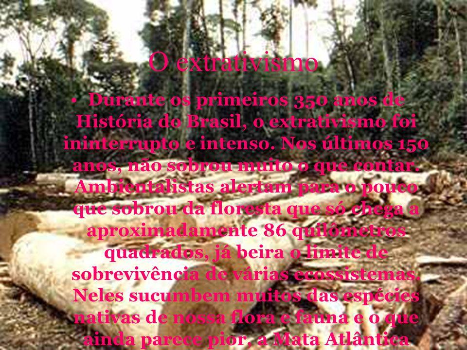 O extrativismo Durante os primeiros 350 anos de História do Brasil, o extrativismo foi ininterrupto e intenso.