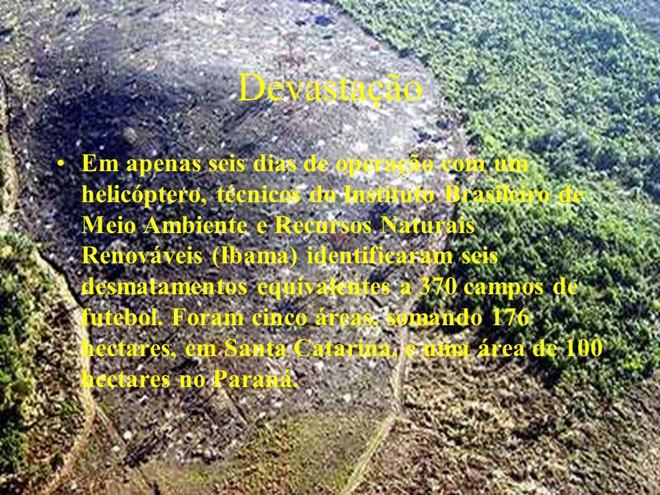 Devastação Em apenas seis dias de operação com um helicóptero, técnicos do Instituto Brasileiro de Meio Ambiente e Recursos Naturais Renováveis (Ibama) identificaram seis desmatamentos equivalentes a 370 campos de futebol.