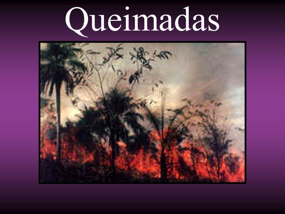 Historicamente as queimadas no Brasil sempre estiveram concentradas nos biomas de fito- fisionomia aberta, como é o caso dos cerrados, caatingas, pantanal e campos sulinos.