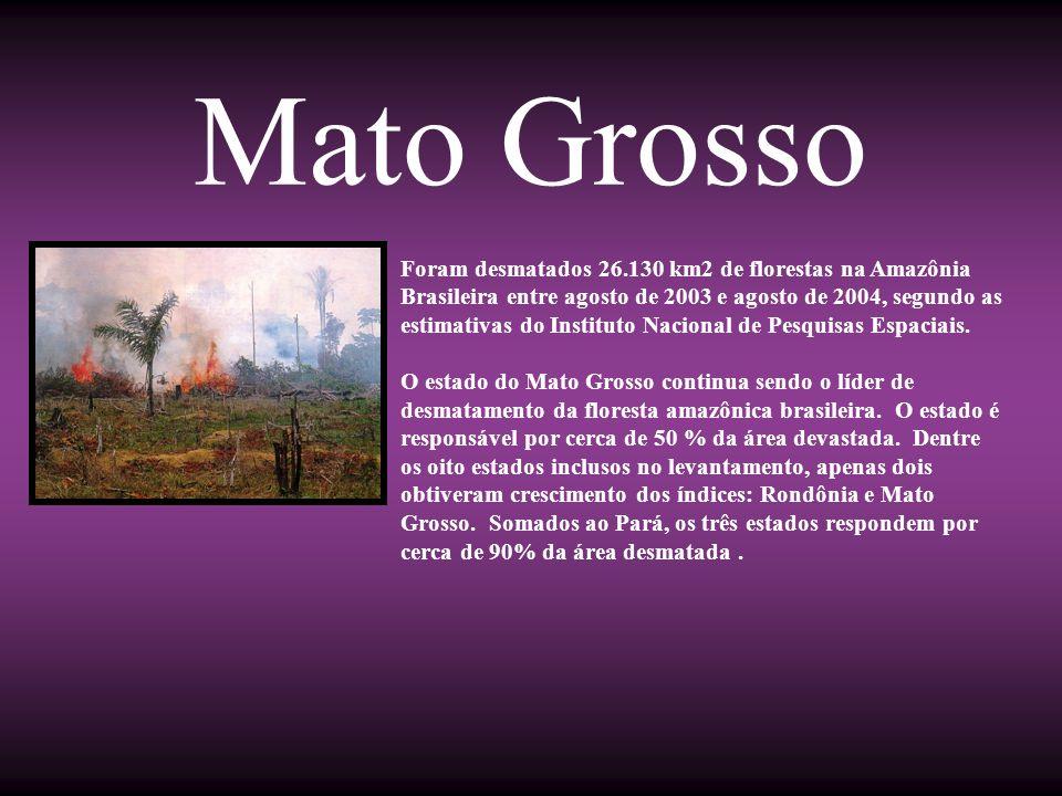 Mato Grosso Foram desmatados 26.130 km2 de florestas na Amazônia Brasileira entre agosto de 2003 e agosto de 2004, segundo as estimativas do Instituto