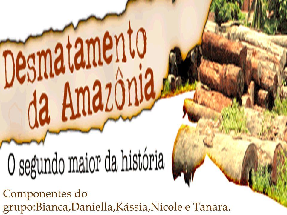 O desflorestamento na Amazônia se iniciou há anos, quando os colonizadores chegaram ao nosso território.