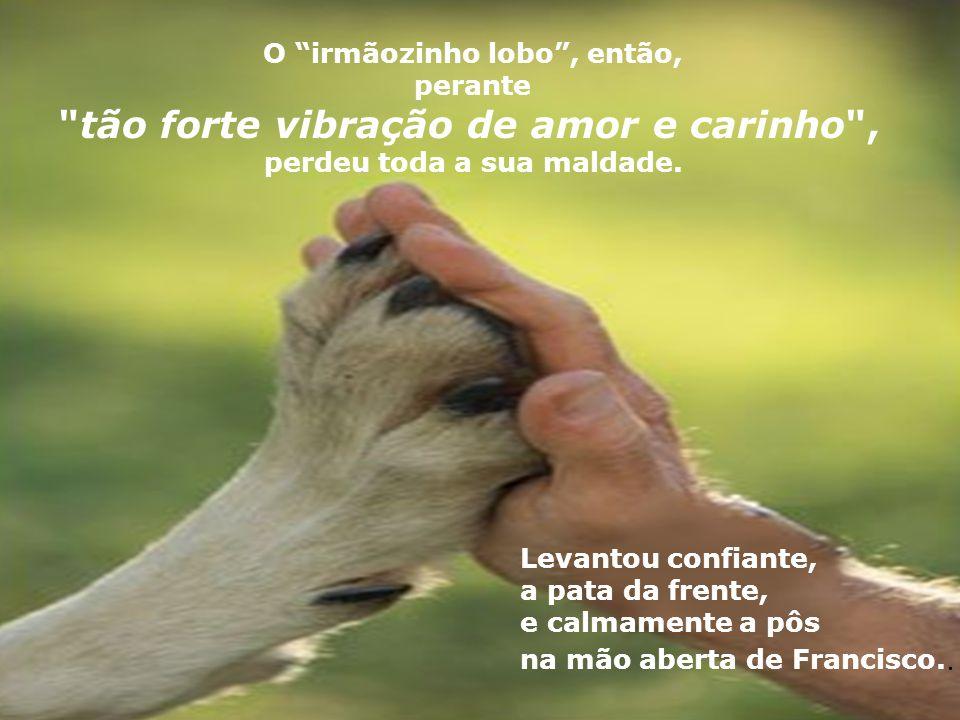 Francisco então falou para o lobo: Irmãozinho Lobo , quero somente conversar com você, meu irmão ...