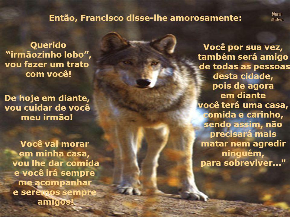 O irmãozinho lobo , então, perante tão forte vibração de amor e carinho , perdeu toda a sua maldade.