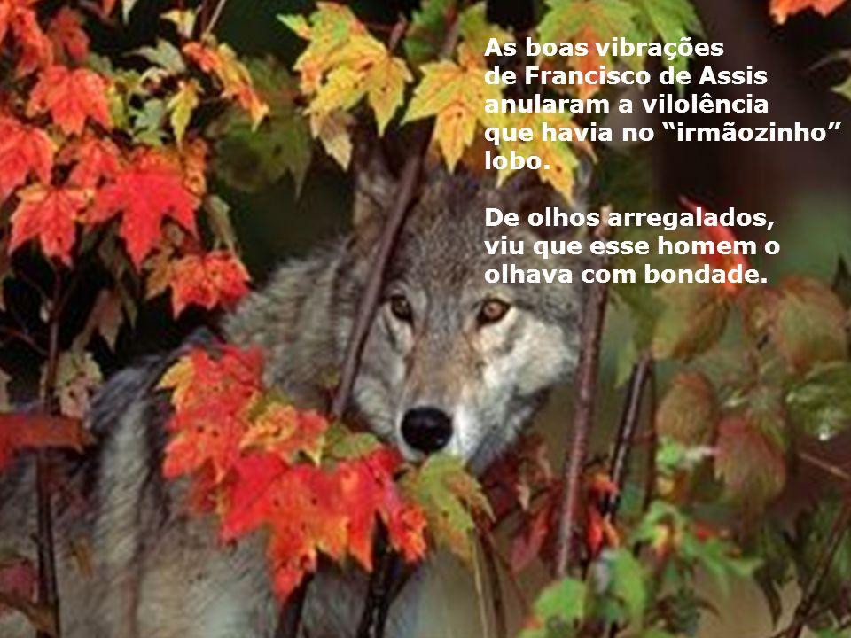 As boas vibrações de Francisco de Assis anularam a vilolência que havia no irmãozinho lobo.