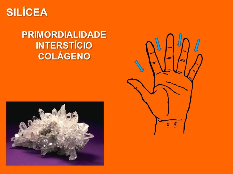 SILÍCEA PRIMORDIALIDADE INTERSTÍCIO COLÁGENO PRIMORDIALIDADE INTERSTÍCIO COLÁGENO