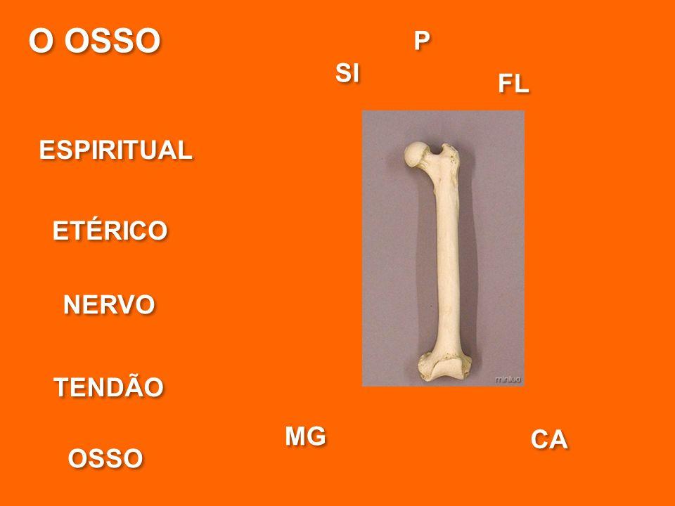 O OSSO ESPIRITUAL ETÉRICO NERVO OSSO MG P P SI CA FL TENDÃO