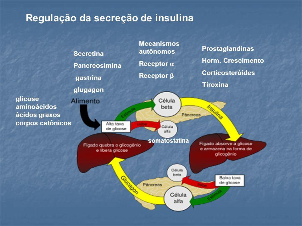 Secretina Pancreosimina gastrina glugagon glicose aminoácidos ácidos graxos corpos cetônicos Regulação da secreção de insulina Mecanismos autônomos Re