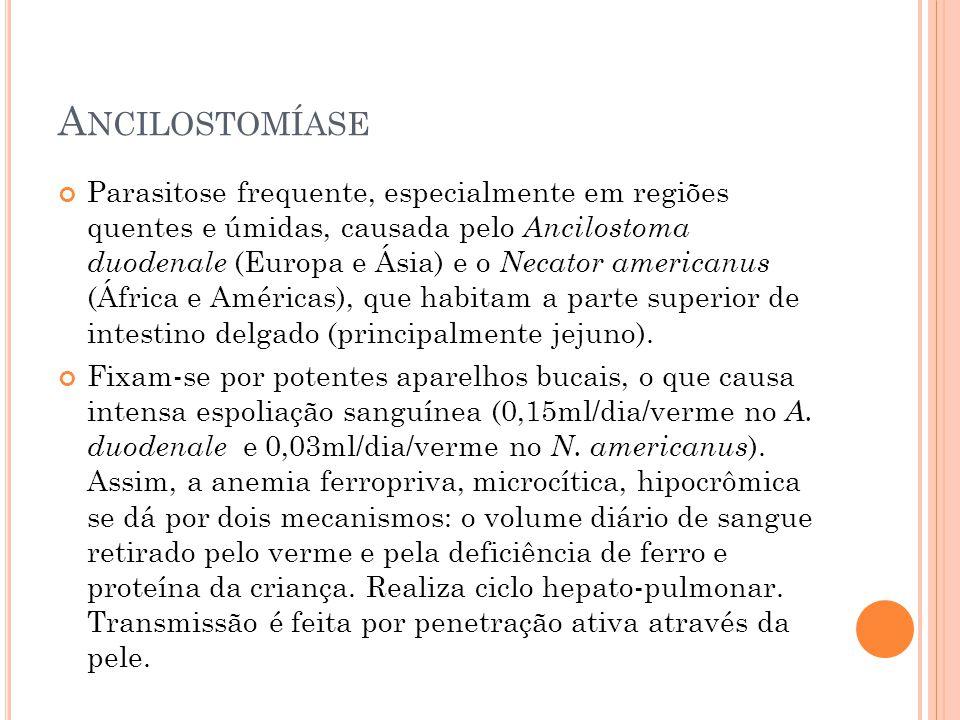 A NCILOSTOMÍASE Parasitose frequente, especialmente em regiões quentes e úmidas, causada pelo Ancilostoma duodenale (Europa e Ásia) e o Necator americanus (África e Américas), que habitam a parte superior de intestino delgado (principalmente jejuno).