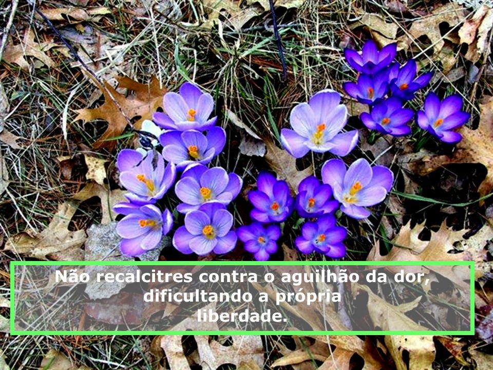 O sarçal e os pedrouços do teu caminho após percorridos, abrir-se-ão em flores e atapetarão o solo por onde passarão outros pés, após os haveres trans