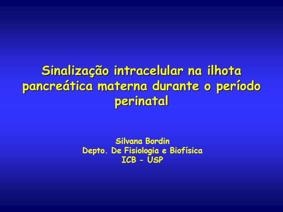 Sinalização intracelular na ilhota pancreática materna durante o período perinatal Silvana Bordin Depto.