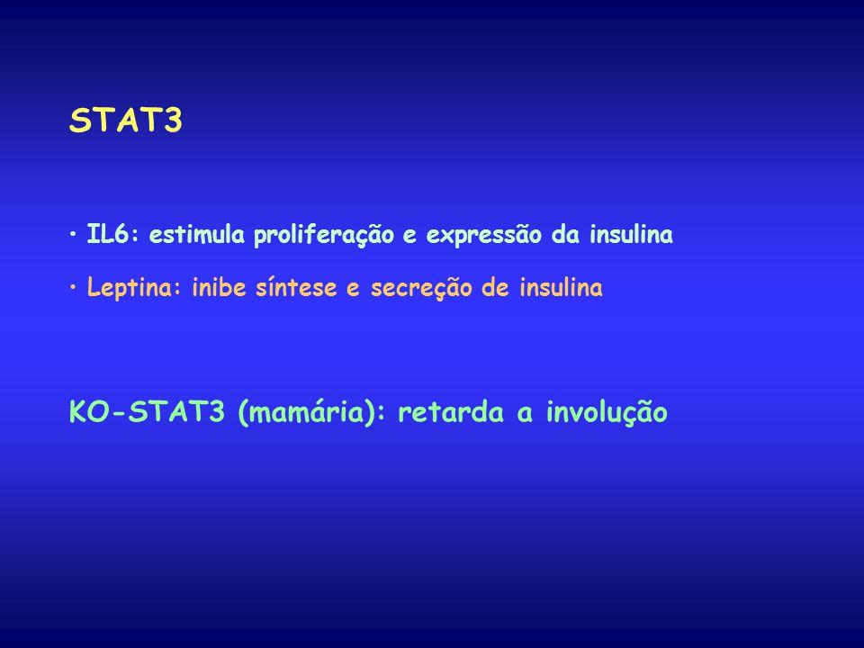 STAT3 IL6: estimula proliferação e expressão da insulina Leptina: inibe síntese e secreção de insulina KO-STAT3 (mamária): retarda a involução