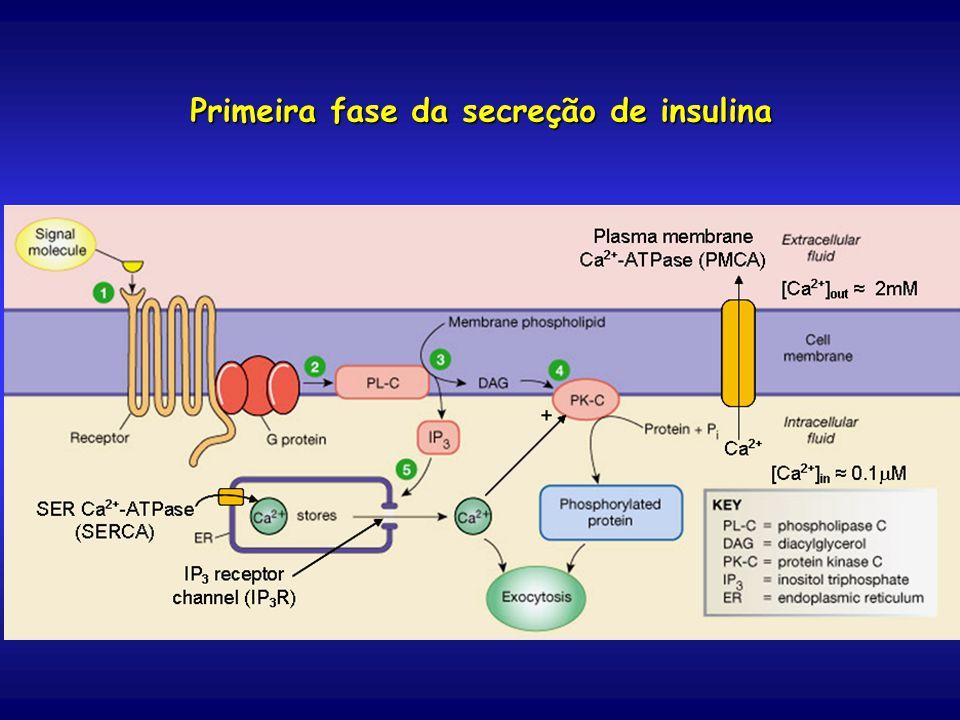 Primeira fase da secreção de insulina