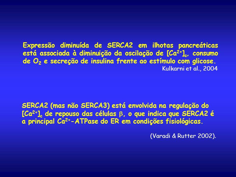 Expressão diminuída de SERCA2 em ilhotas pancreáticas está associada à diminuição da oscilação de [Ca 2+ ] c, consumo de O 2 e secreção de insulina frente ao estímulo com glicose.