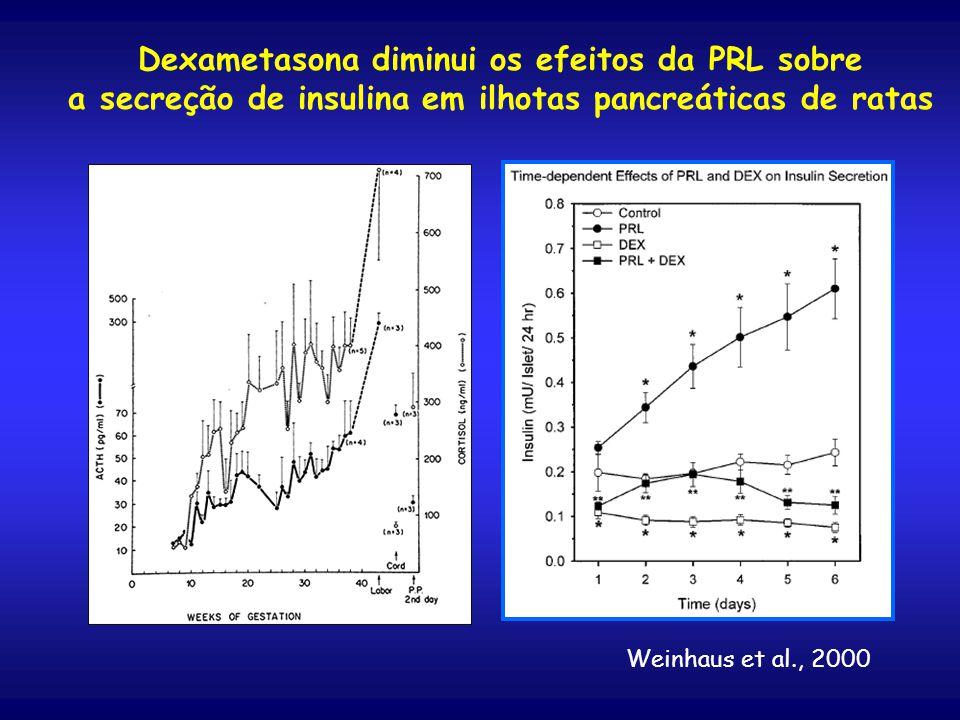 Dexametasona diminui os efeitos da PRL sobre a secreção de insulina em ilhotas pancreáticas de ratas Weinhaus et al., 2000