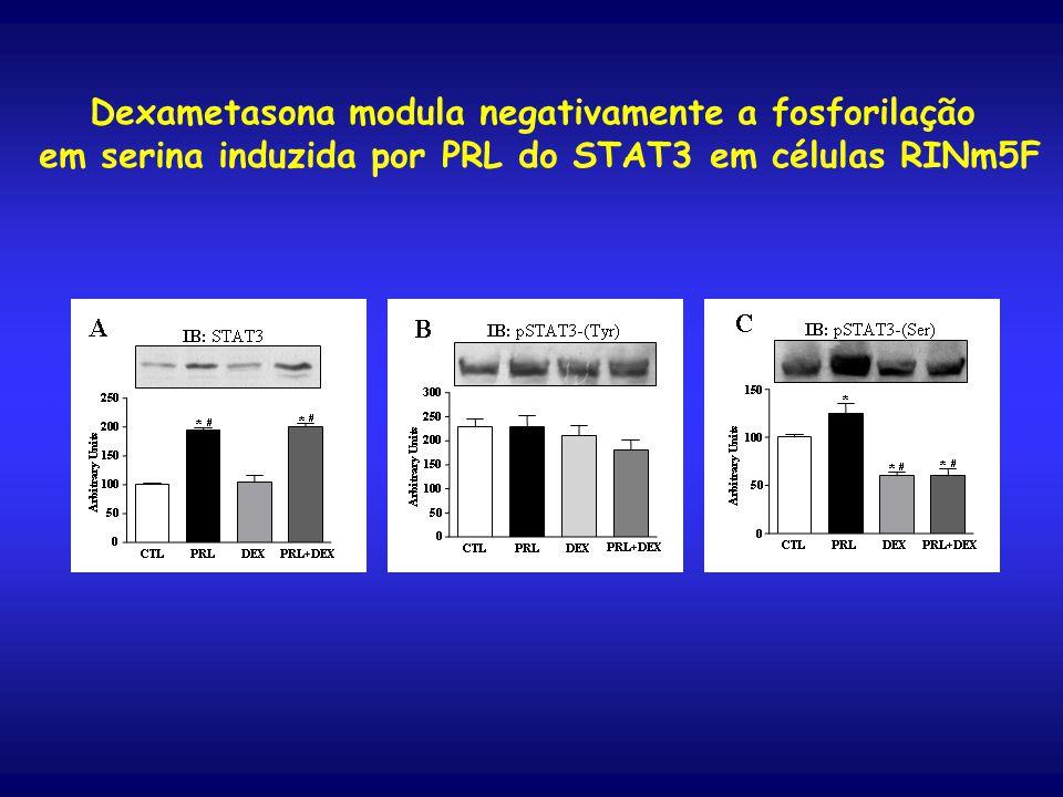 Dexametasona modula negativamente a fosforilação em serina induzida por PRL do STAT3 em células RINm5F
