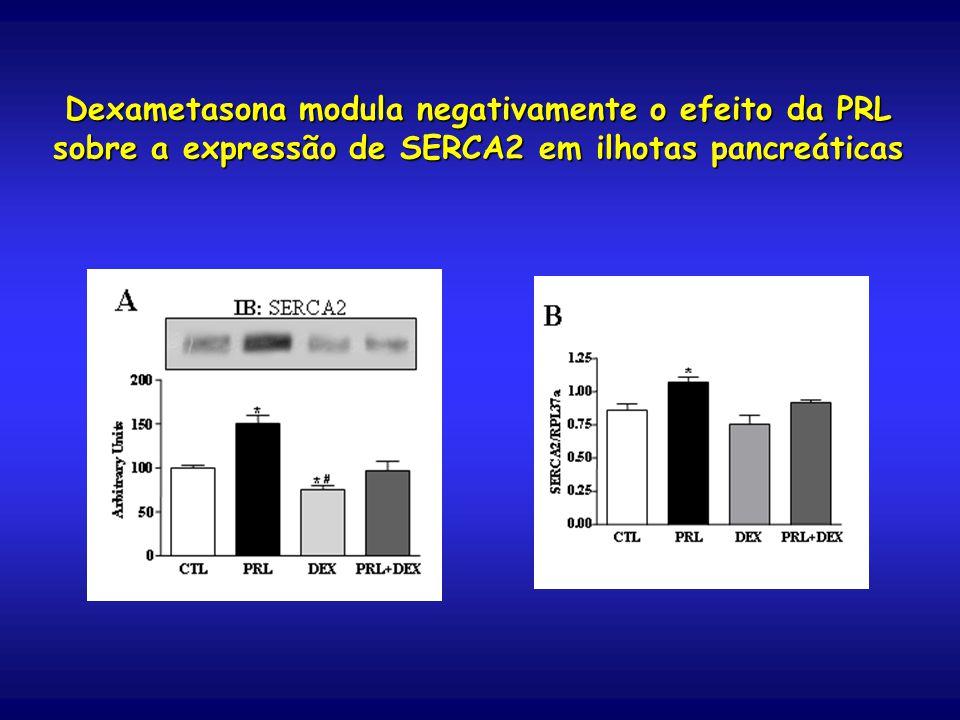 Dexametasona modula negativamente o efeito da PRL sobre a expressão de SERCA2 em ilhotas pancreáticas