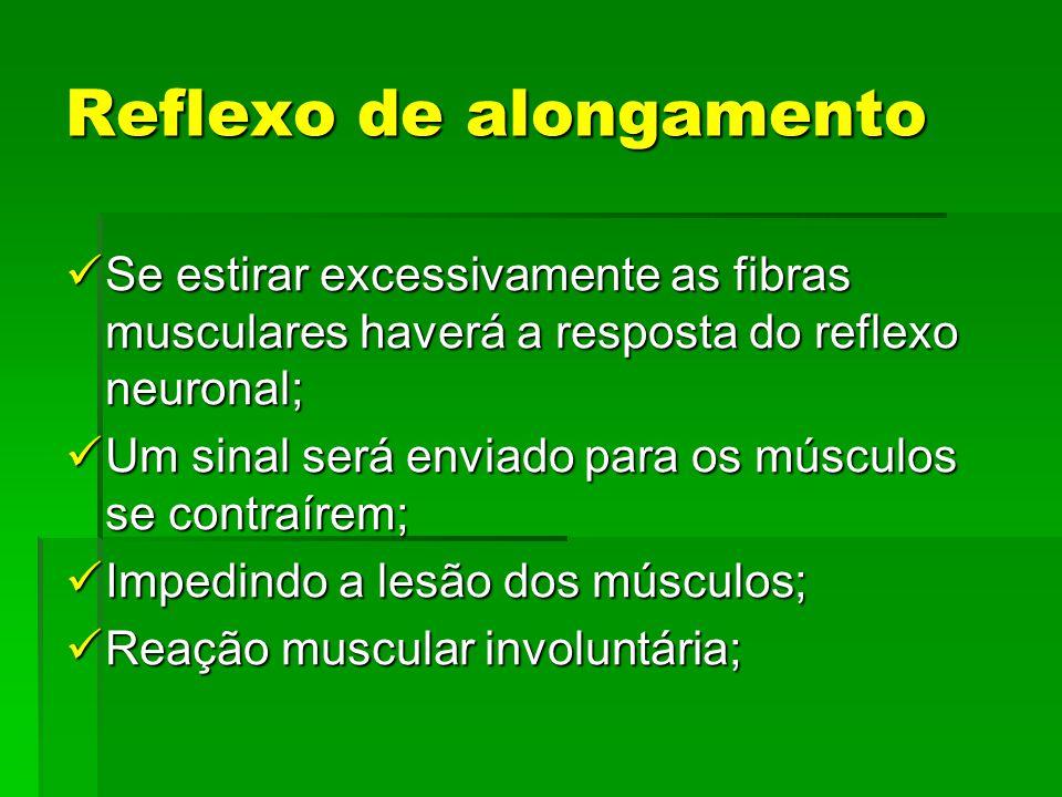 Reflexo de alongamento Se estirar excessivamente as fibras musculares haverá a resposta do reflexo neuronal; Um sinal será enviado para os músculos se contraírem; Impedindo a lesão dos músculos; Reação muscular involuntária;