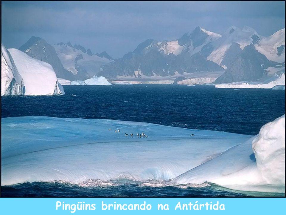 Pingüins brincando na Antártida