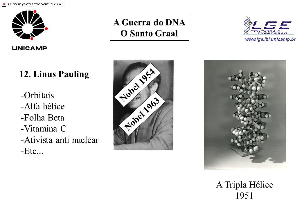 www.lge.ibi.unicamp.br A Guerra do DNA O Santo Graal 12. Linus Pauling -Orbitais -Alfa hélice -Folha Beta -Vitamina C -Ativista anti nuclear -Etc... N