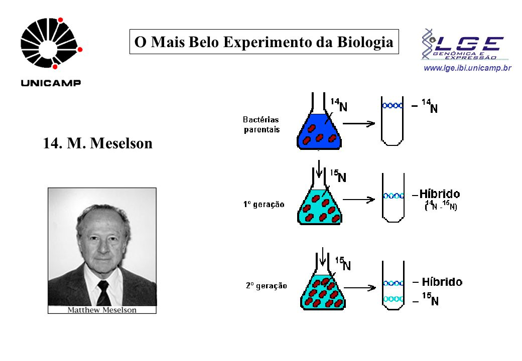 www.lge.ibi.unicamp.br O Mais Belo Experimento da Biologia 14. M. Meselson