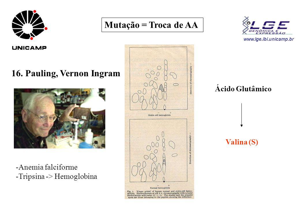 www.lge.ibi.unicamp.br Mutação = Troca de AA 16. Pauling, Vernon Ingram -Anemia falciforme -Tripsina -> Hemoglobina Ácido Glutâmico Valina (S)
