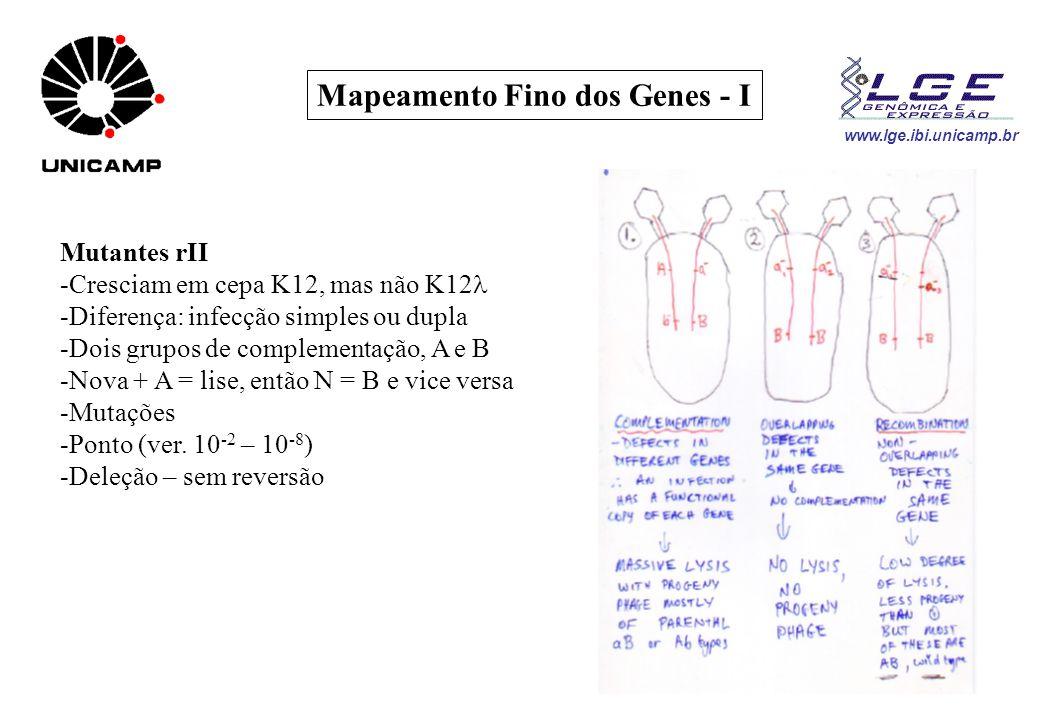 www.lge.ibi.unicamp.br Mapeamento Fino dos Genes - I Mutantes rII -Cresciam em cepa K12, mas não K12 -Diferença: infecção simples ou dupla -Dois grupo