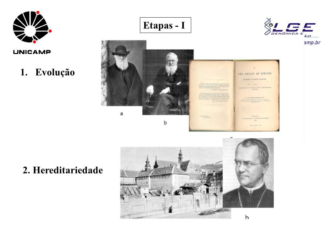 www.lge.ibi.unicamp.br Etapas - I 1.Evolução 2. Hereditariedade