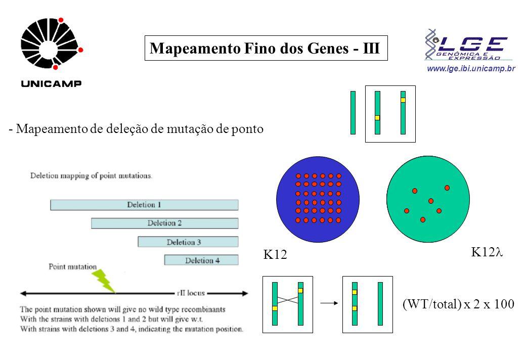 www.lge.ibi.unicamp.br Mapeamento Fino dos Genes - III - Mapeamento de deleção de mutação de ponto K12 (WT/total) x 2 x 100