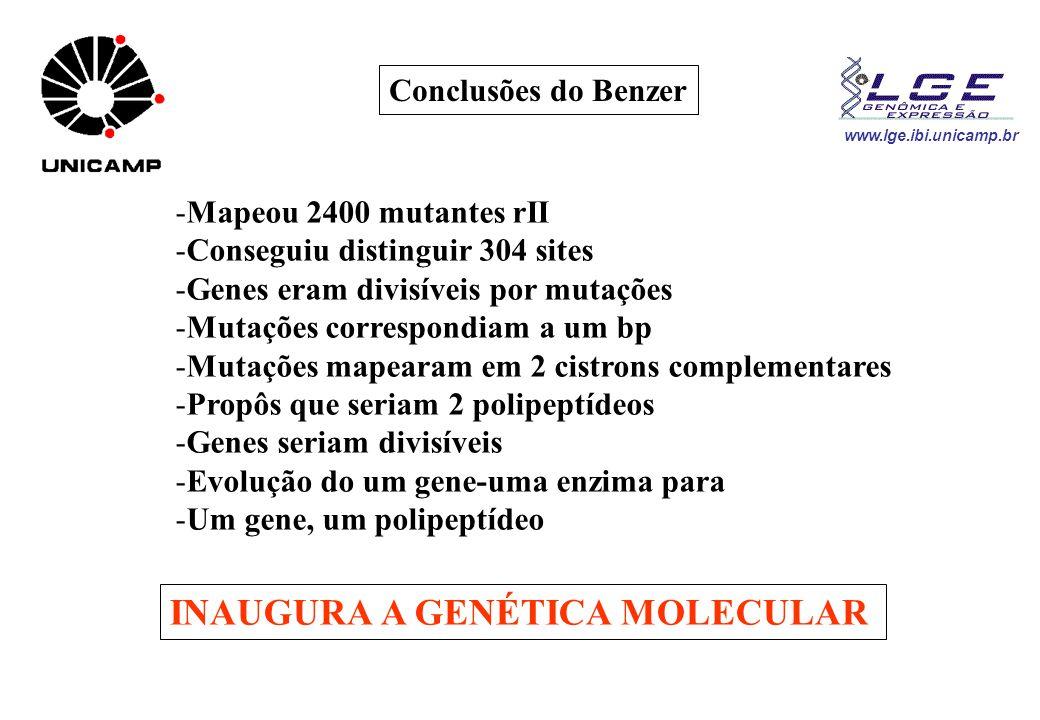 www.lge.ibi.unicamp.br -Mapeou 2400 mutantes rII -Conseguiu distinguir 304 sites -Genes eram divisíveis por mutações -Mutações correspondiam a um bp -