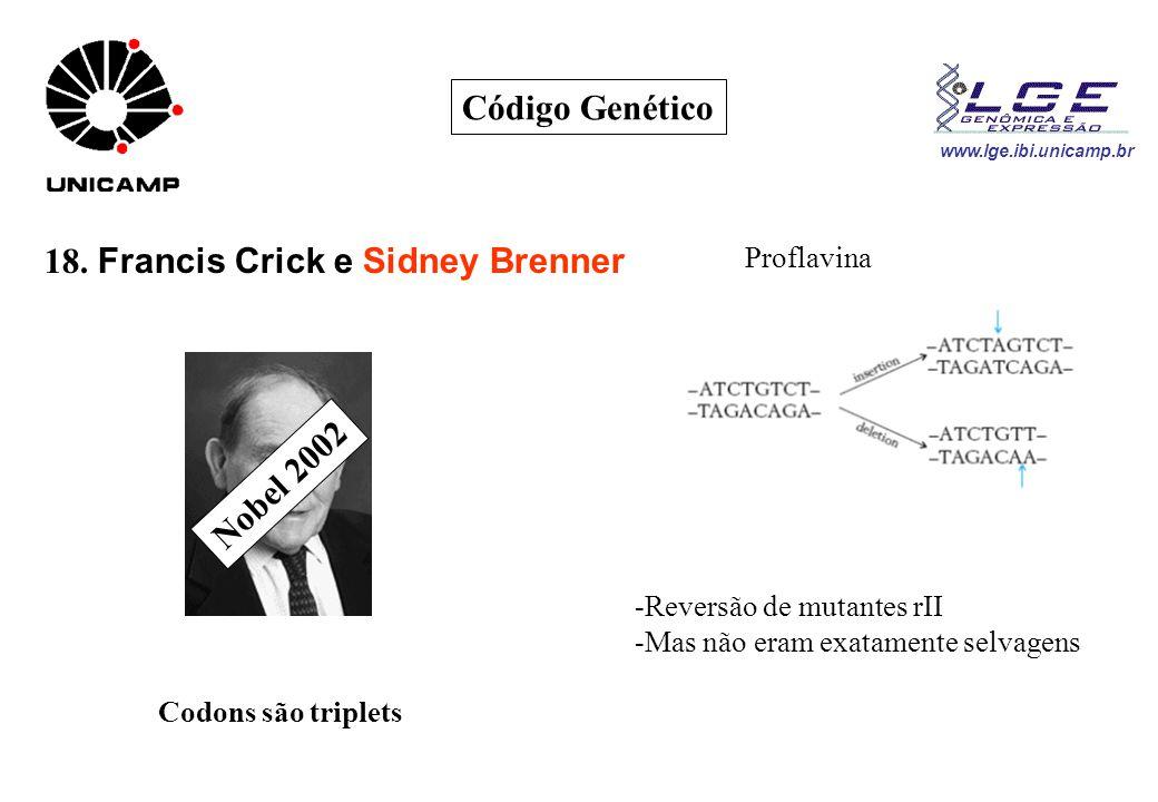www.lge.ibi.unicamp.br Código Genético 18. Francis Crick e Sidney Brenner Nobel 2002 Proflavina Codons são triplets -Reversão de mutantes rII -Mas não