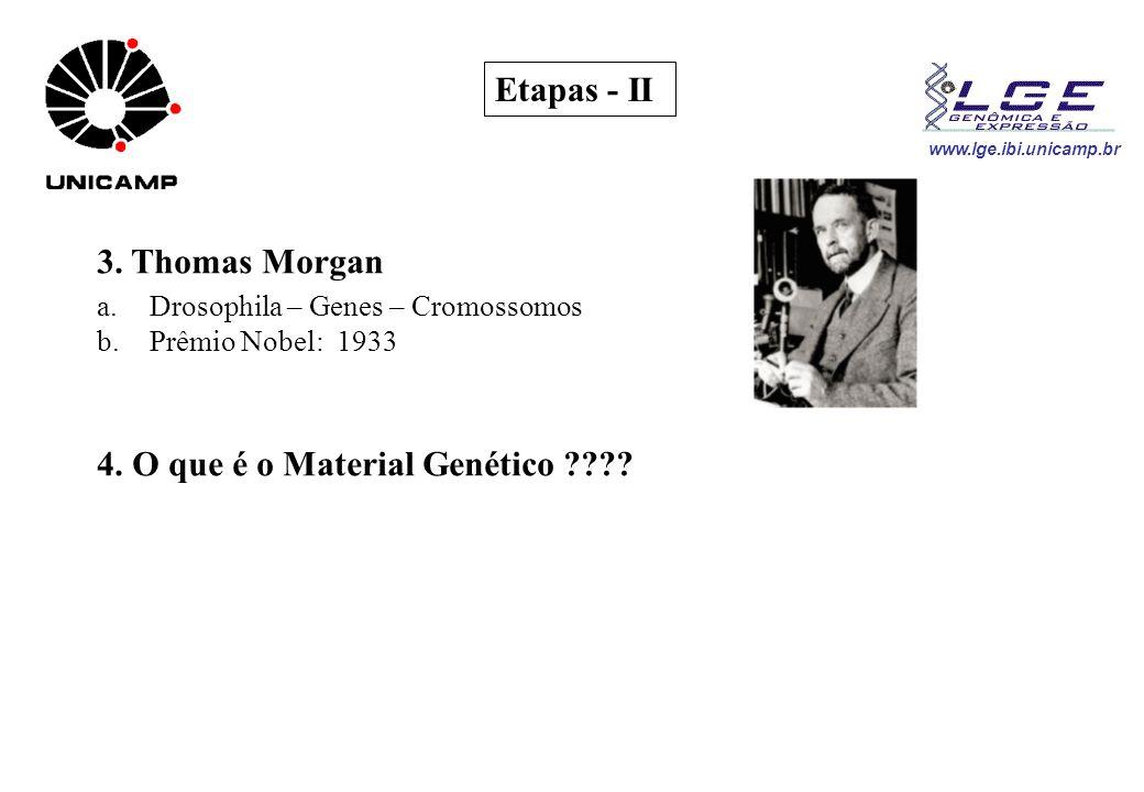www.lge.ibi.unicamp.br Etapas - II 3. Thomas Morgan a.Drosophila – Genes – Cromossomos b.Prêmio Nobel: 1933 4. O que é o Material Genético ????