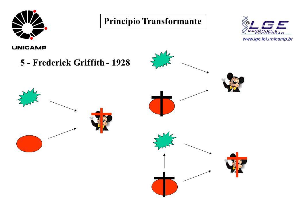 www.lge.ibi.unicamp.br O Princípio do DNA 6.