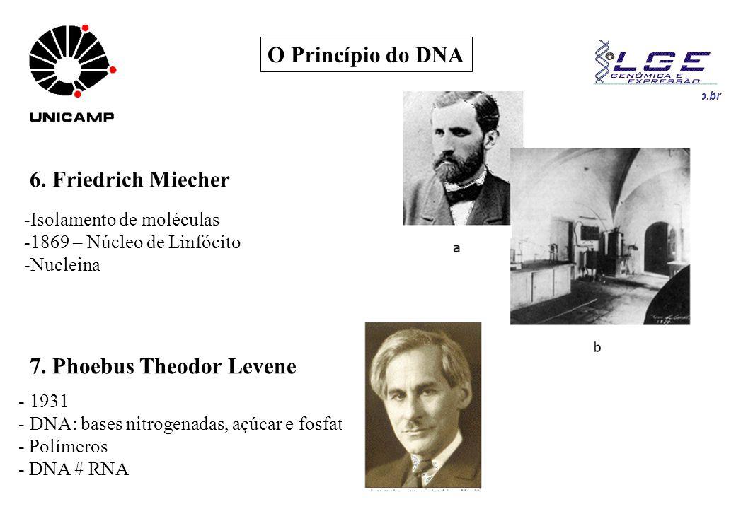 www.lge.ibi.unicamp.br O Princípio do DNA 6. Friedrich Miecher -Isolamento de moléculas -1869 – Núcleo de Linfócito -Nucleina 7. Phoebus Theodor Leven