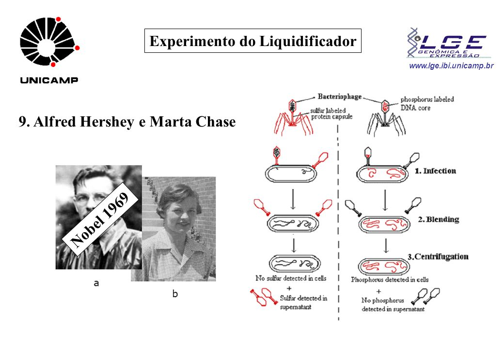 www.lge.ibi.unicamp.br Experimento do Liquidificador 9. Alfred Hershey e Marta Chase Nobel 1969