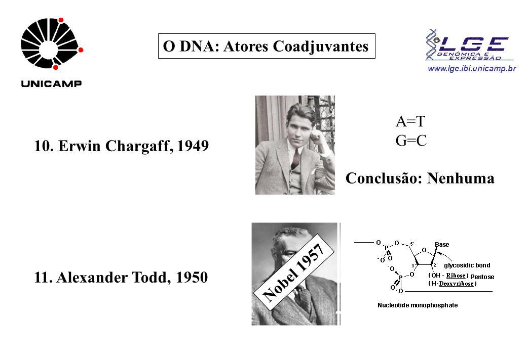 www.lge.ibi.unicamp.br O DNA: Atores Coadjuvantes 10. Erwin Chargaff, 1949 A=T G=C Conclusão: Nenhuma 11. Alexander Todd, 1950 Nobel 1957