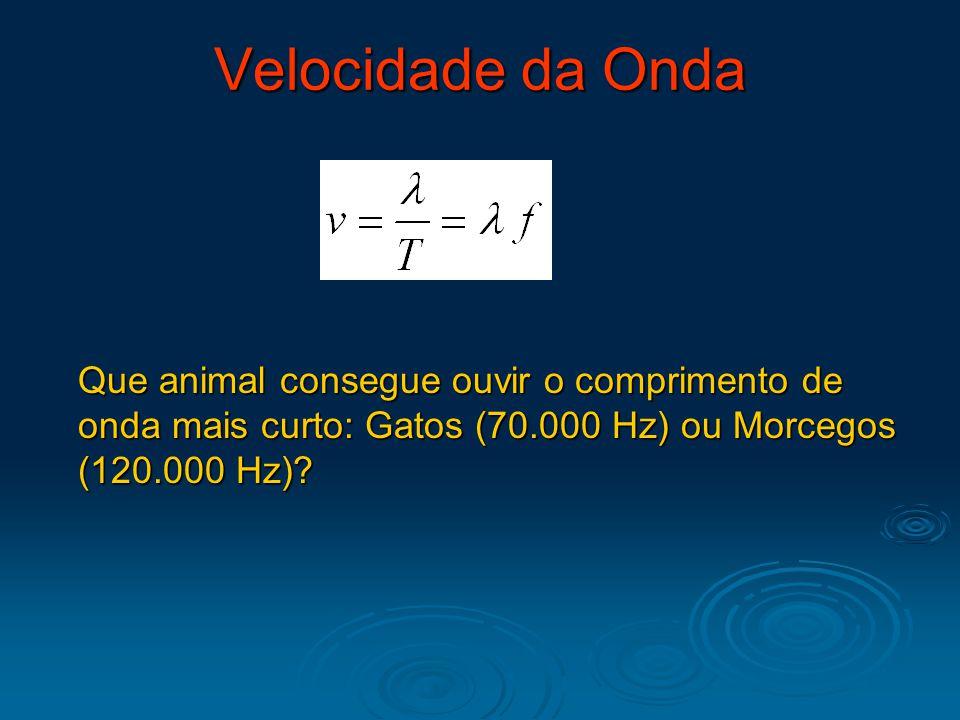 Velocidade da Onda Que animal consegue ouvir o comprimento de onda mais curto: Gatos (70.000 Hz) ou Morcegos (120.000 Hz)?