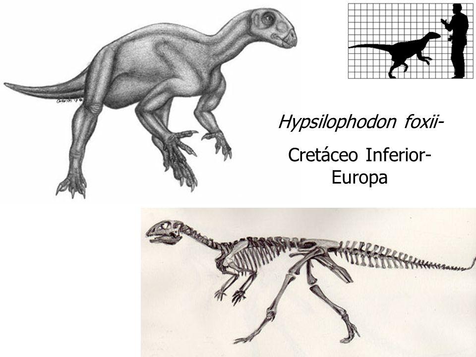 Hypsilophodon foxii- Cretáceo Inferior- Europa