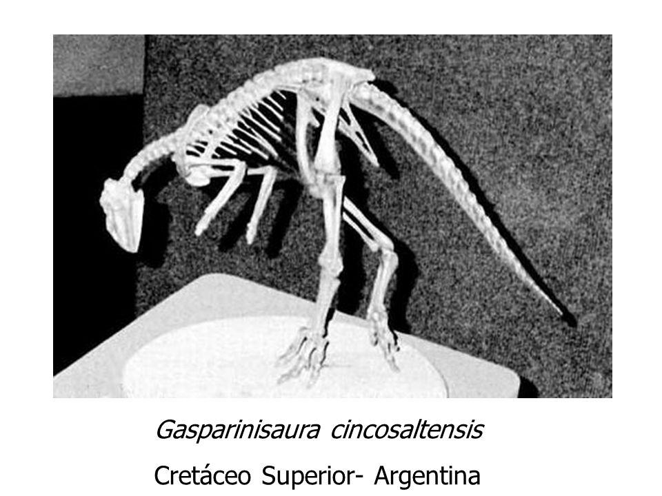 Gasparinisaura cincosaltensis Cretáceo Superior- Argentina