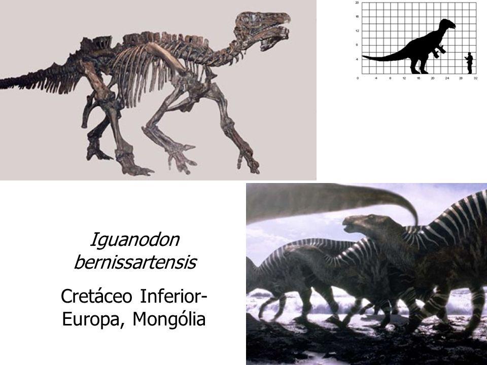 Iguanodon bernissartensis Cretáceo Inferior- Europa, Mongólia