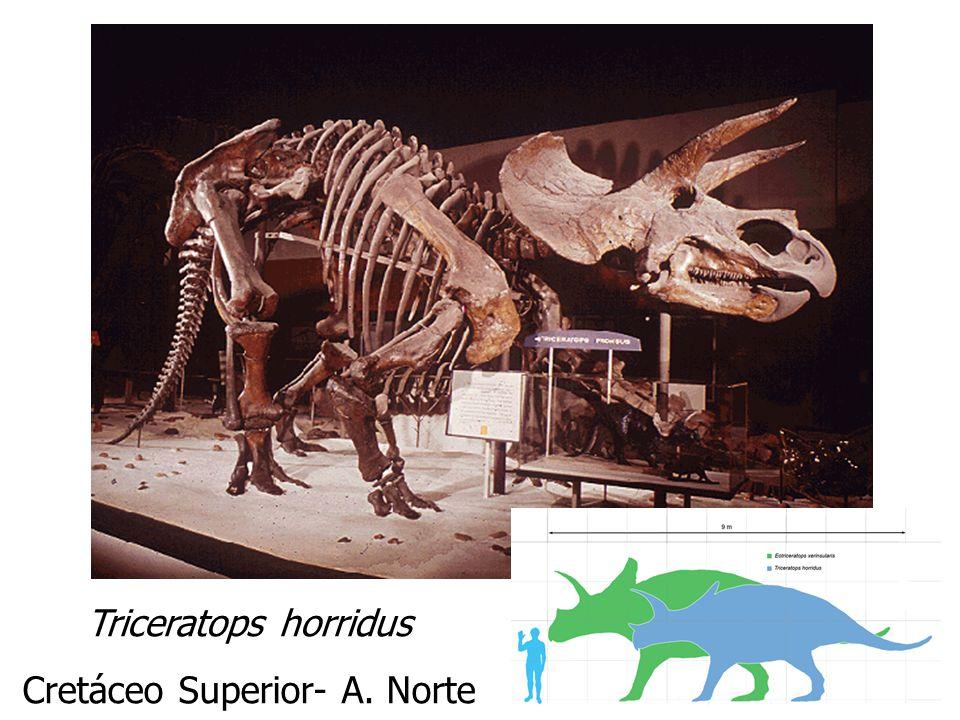 Triceratops horridus Cretáceo Superior- A. Norte