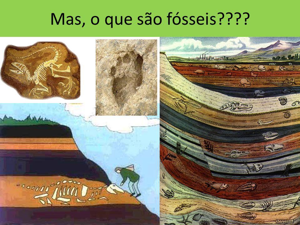 Mas, o que são fósseis????