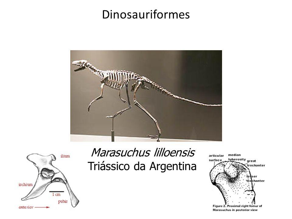 Marasuchus lilloensis Triássico da Argentina Dinosauriformes