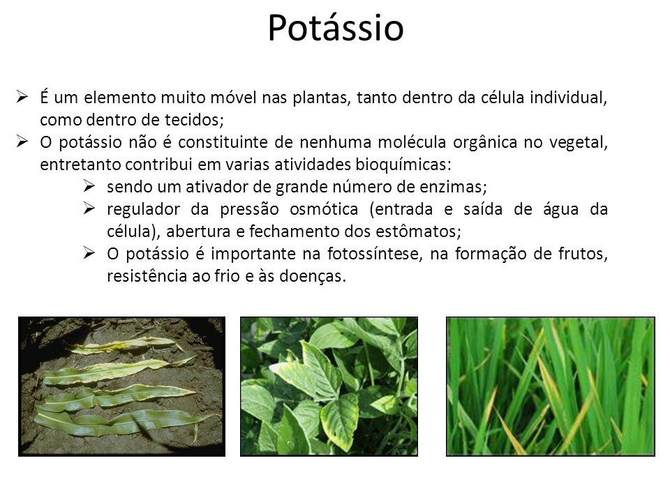 Potássio  É um elemento muito móvel nas plantas, tanto dentro da célula individual, como dentro de tecidos;  O potássio não é constituinte de nenhum