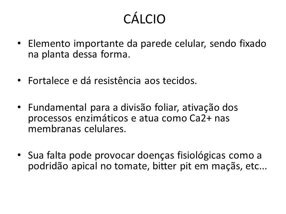 CÁLCIO Elemento importante da parede celular, sendo fixado na planta dessa forma. Fortalece e dá resistência aos tecidos. Fundamental para a divisão f